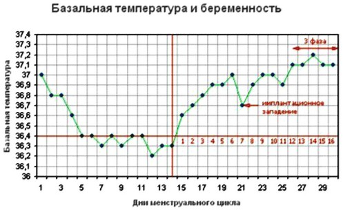Базальная температура и беременность